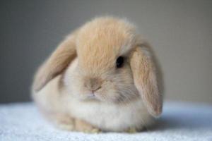 Факторы,влияющие на продолжительность жизни кроликов