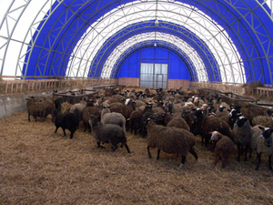Особенности строительства овчарни