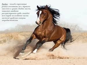 Популярная порода лошади