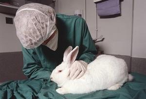 Случаи, когда вакцинация и прививки кроликам бесполезны