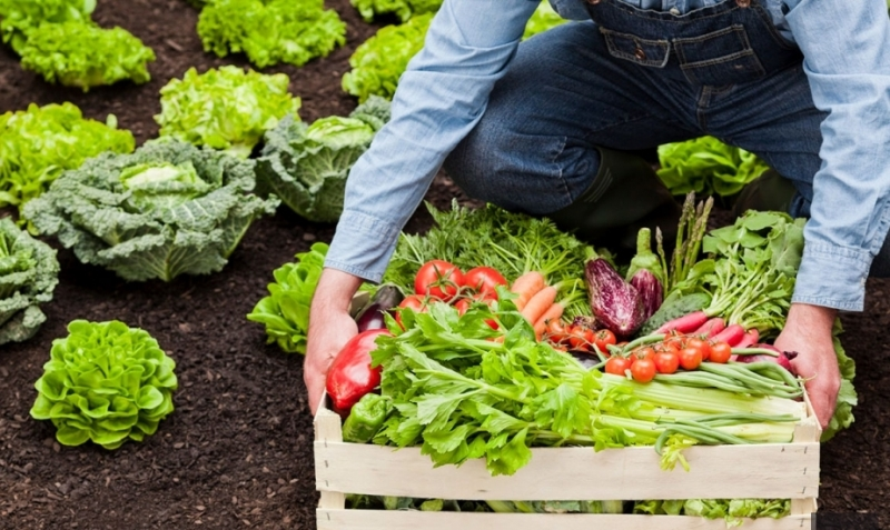 Возможно ли в России масштабное органическое земледелие?