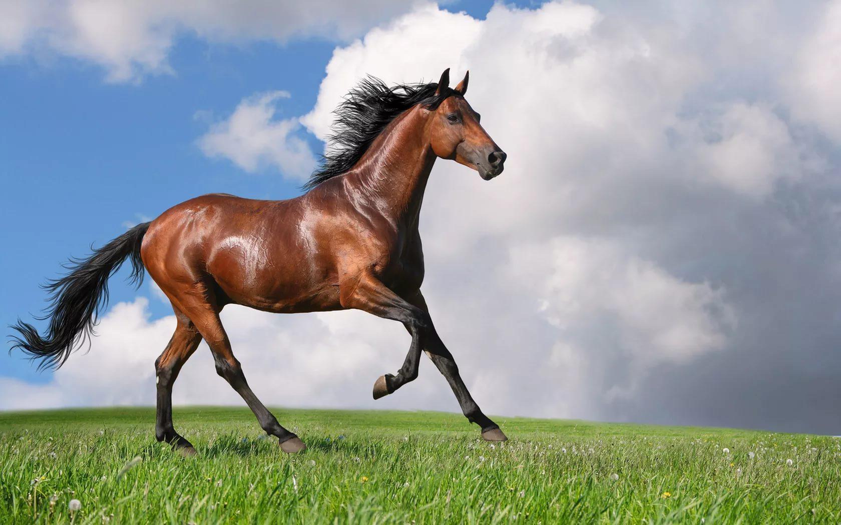 Ver fotos de caballos de mar 74